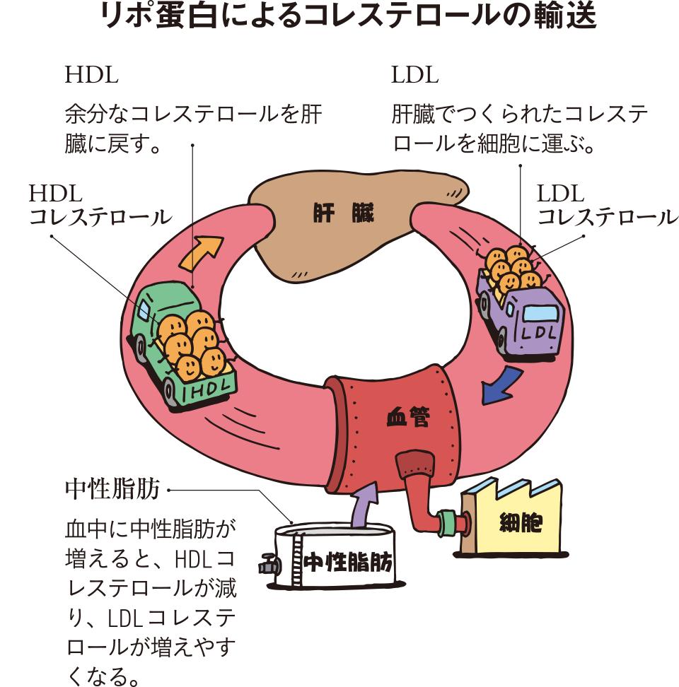 性 減らす 中 脂肪